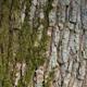 Oak Moss, Creamy Sandalwood